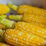 jagung sumber karbohidrat